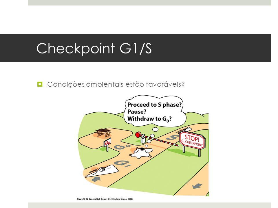 Checkpoint G1/S Condições ambientais estão favoráveis
