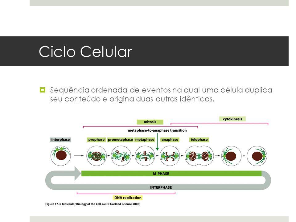 Ciclo Celular Sequência ordenada de eventos na qual uma célula duplica seu conteúdo e origina duas outras idênticas.