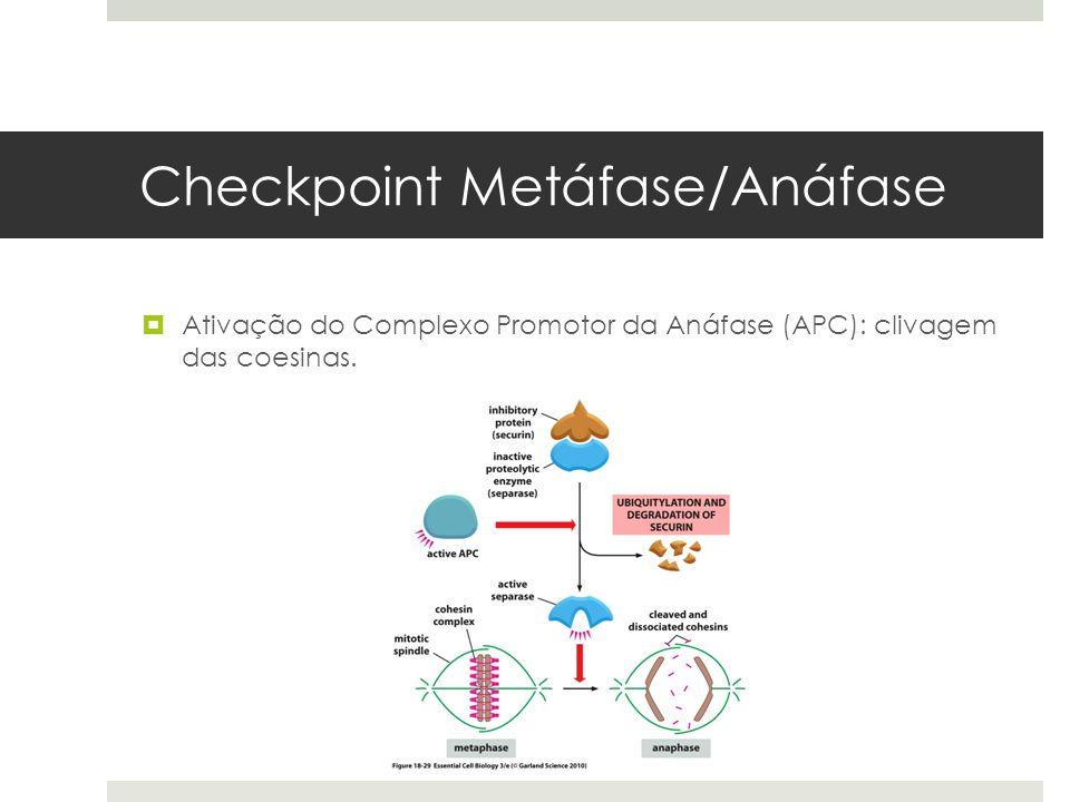 Checkpoint Metáfase/Anáfase