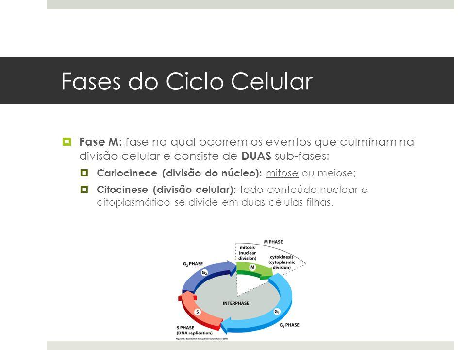 Fases do Ciclo Celular Fase M: fase na qual ocorrem os eventos que culminam na divisão celular e consiste de DUAS sub-fases: