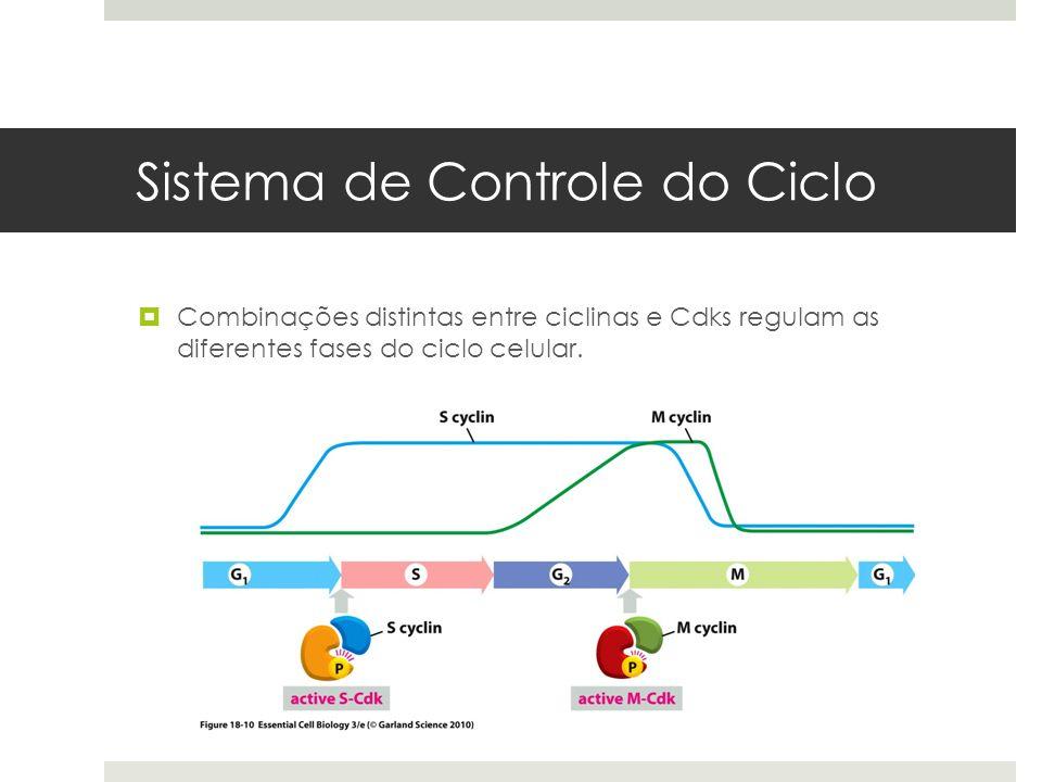 Sistema de Controle do Ciclo