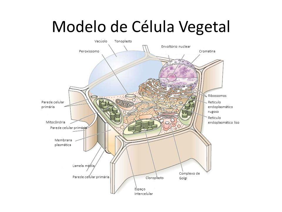 Modelo de Célula Vegetal