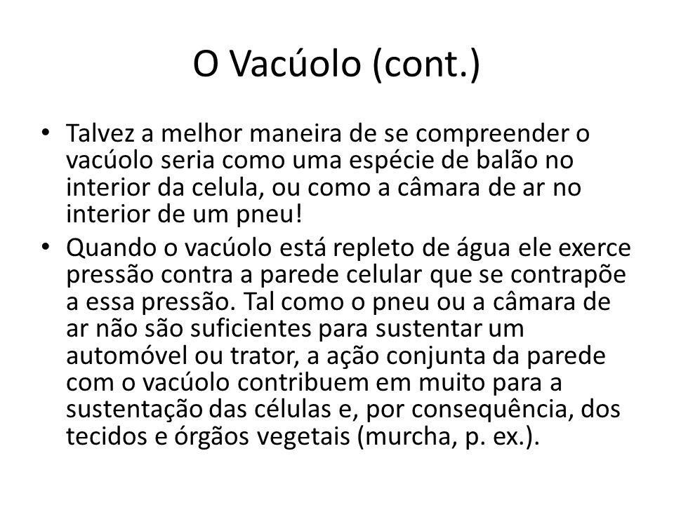 O Vacúolo (cont.)