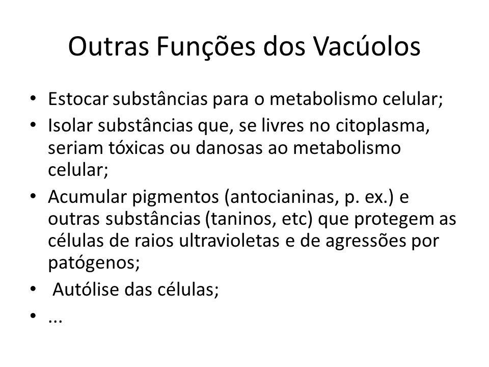 Outras Funções dos Vacúolos
