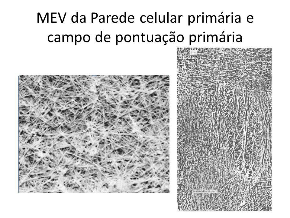 MEV da Parede celular primária e campo de pontuação primária