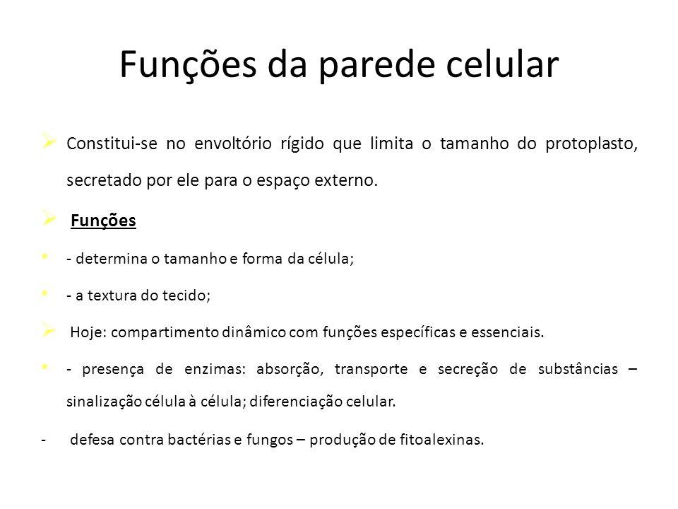 Funções da parede celular