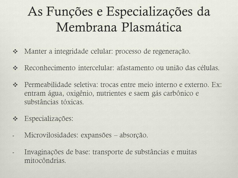 As Funções e Especializações da Membrana Plasmática