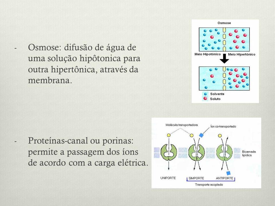 Osmose: difusão de água de uma solução hipôtonica para outra hipertônica, através da membrana.