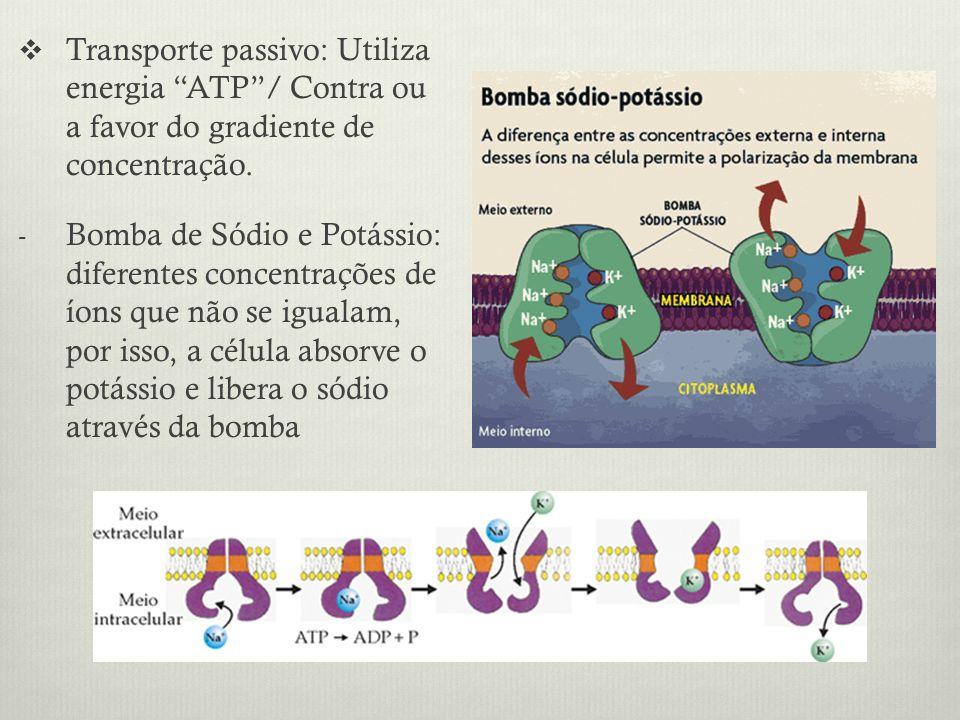 Transporte passivo: Utiliza energia ATP / Contra ou a favor do gradiente de concentração.