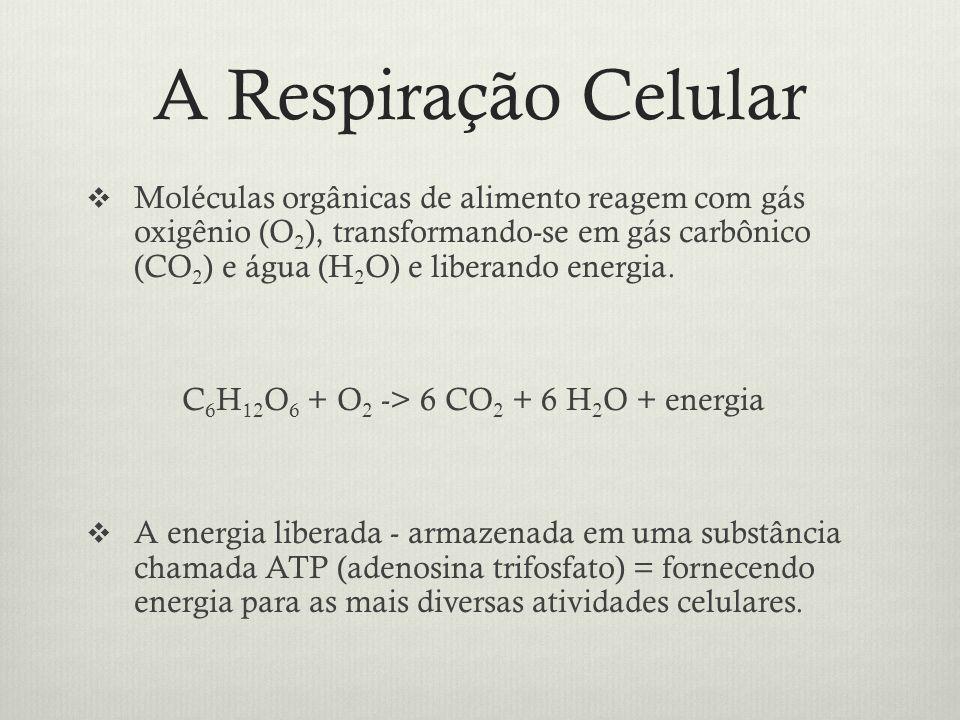 A Respiração Celular
