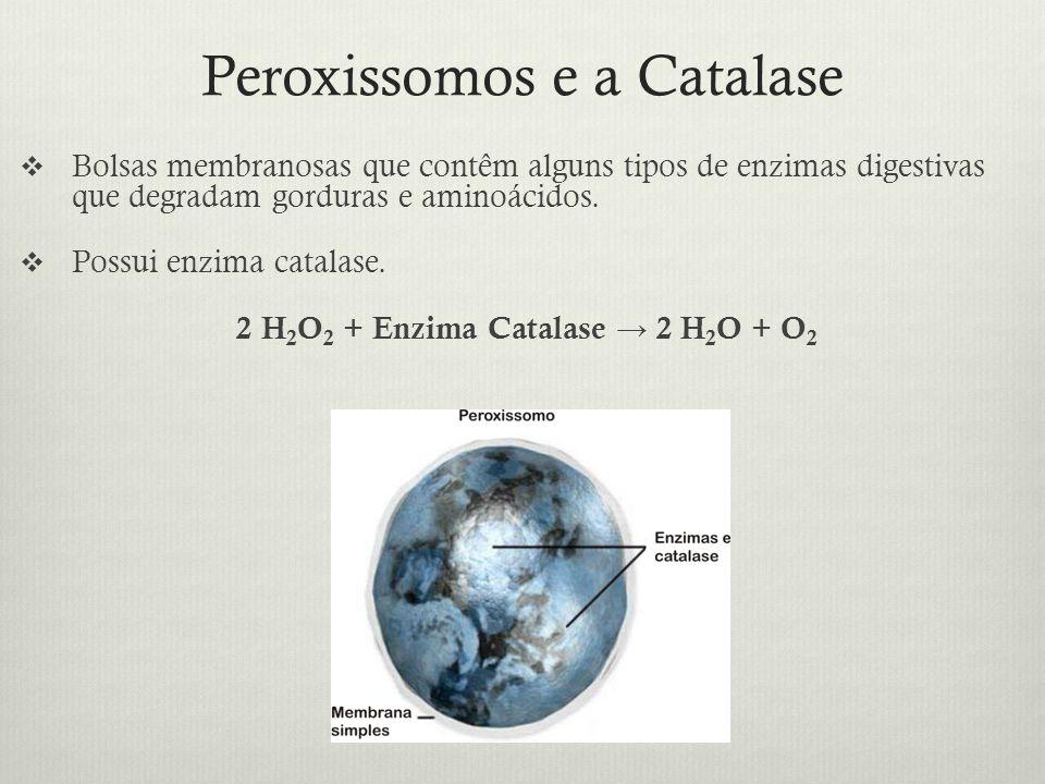 Peroxissomos e a Catalase