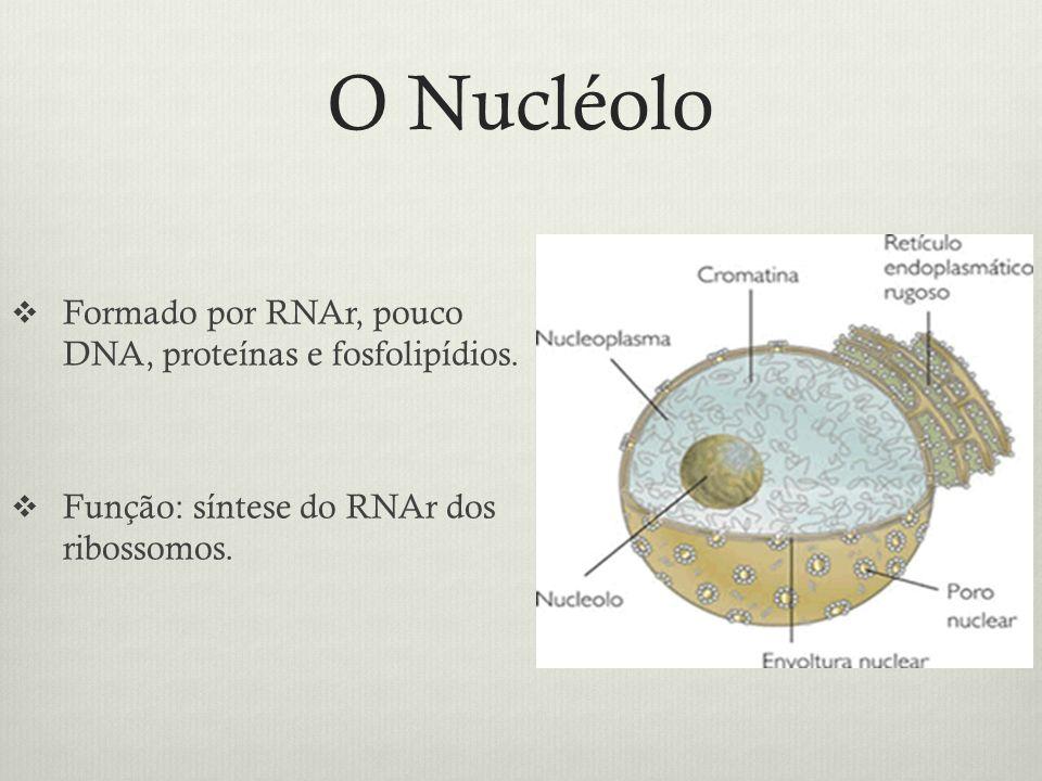 O Nucléolo Formado por RNAr, pouco DNA, proteínas e fosfolipídios.