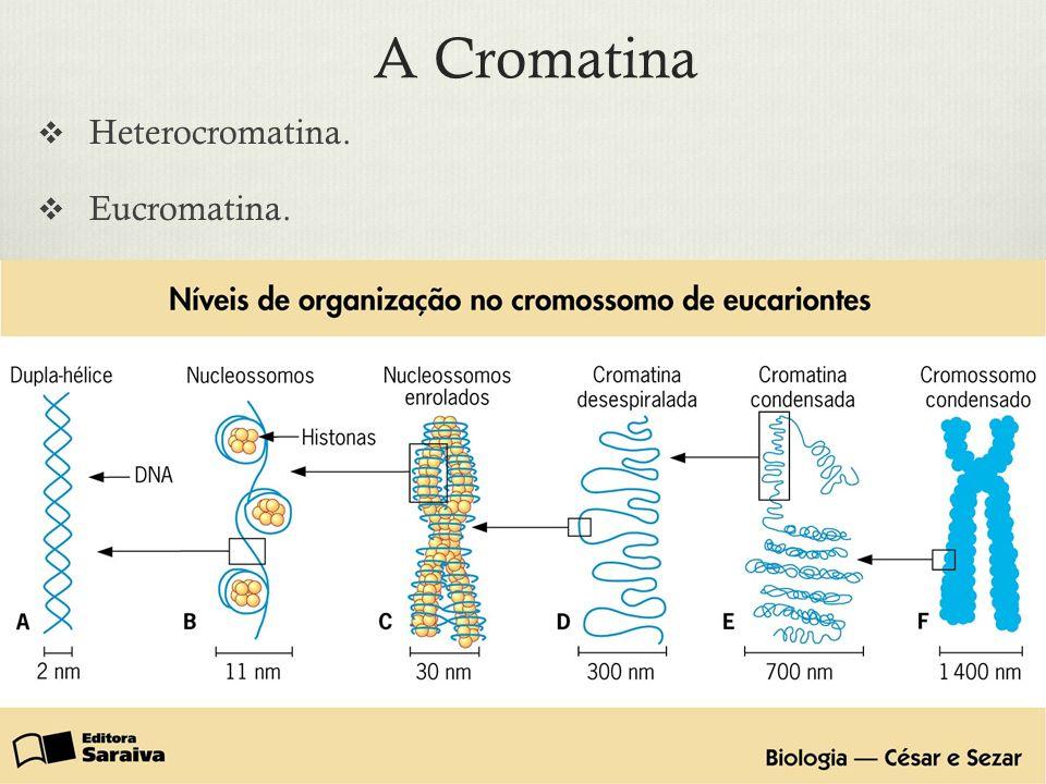 A Cromatina Heterocromatina. Eucromatina.