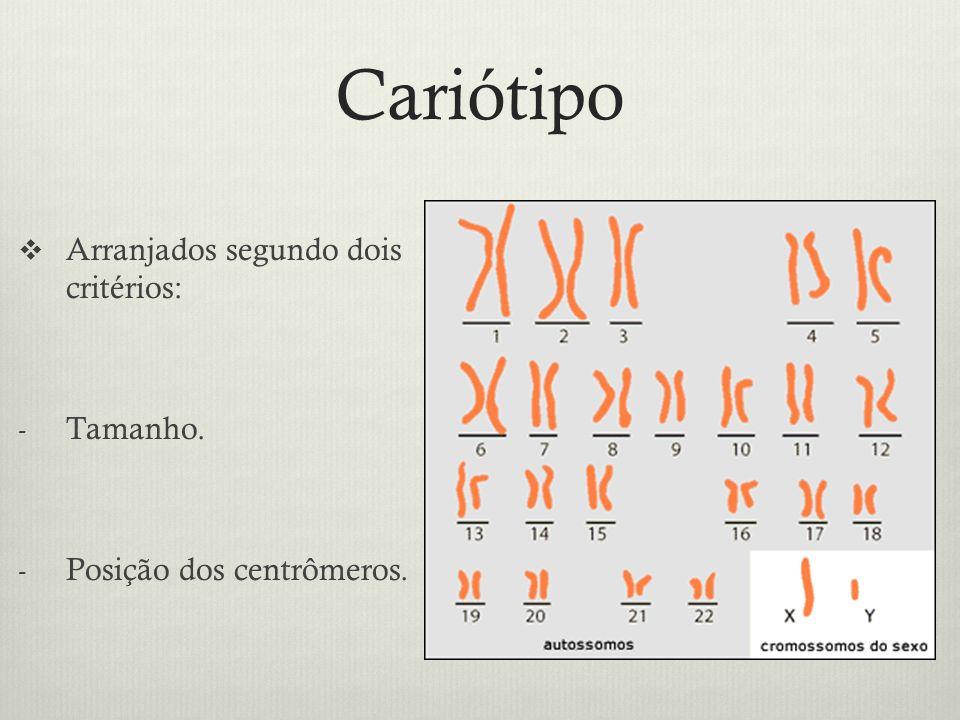 Cariótipo Arranjados segundo dois critérios: Tamanho.