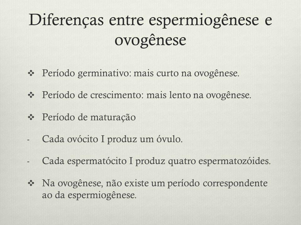 Diferenças entre espermiogênese e ovogênese