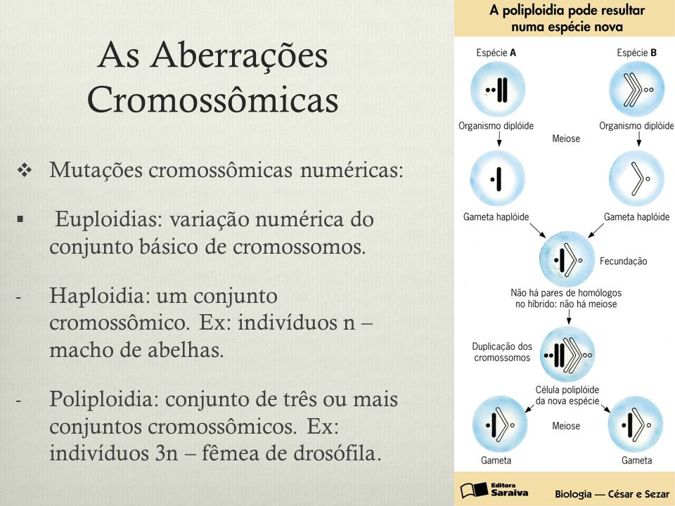 As Aberrações Cromossômicas