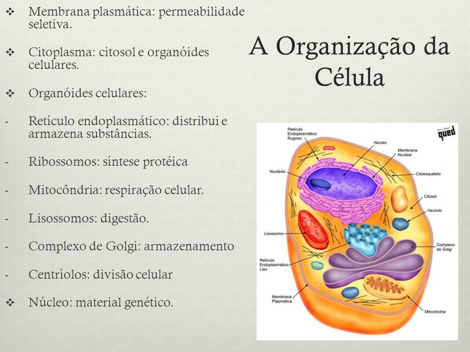 A Organização da Célula