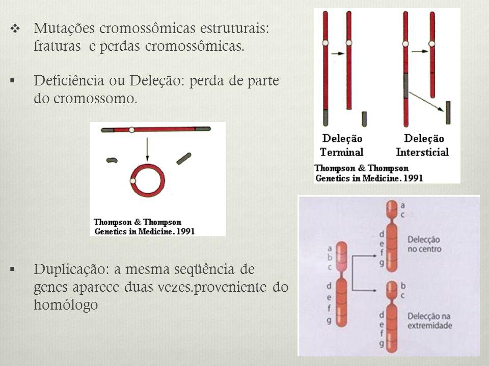 Mutações cromossômicas estruturais: fraturas e perdas cromossômicas.