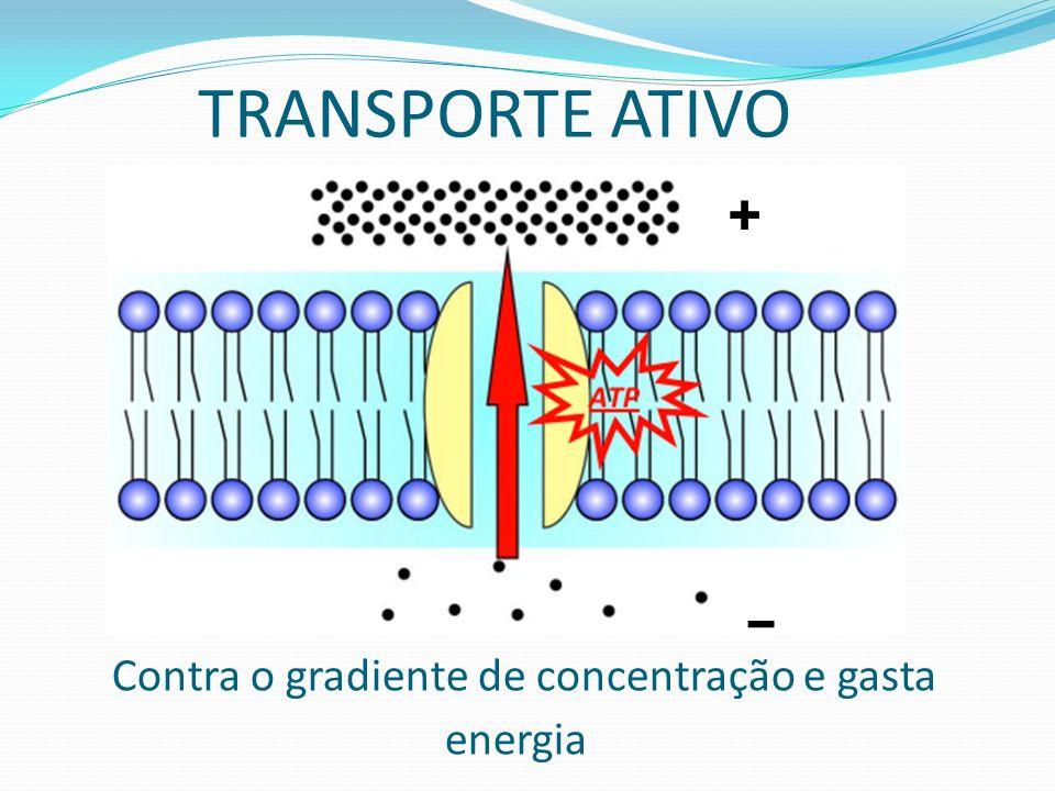 Contra o gradiente de concentração e gasta energia