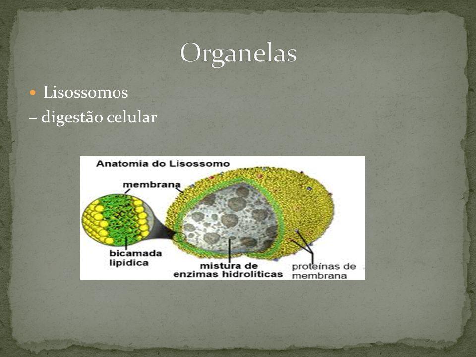 Organelas Lisossomos – digestão celular