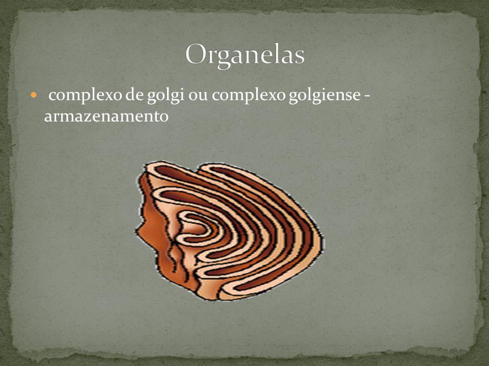 Organelas complexo de golgi ou complexo golgiense - armazenamento