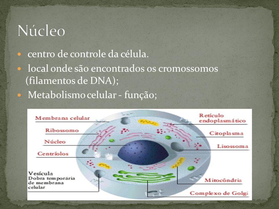 Núcleo centro de controle da célula.