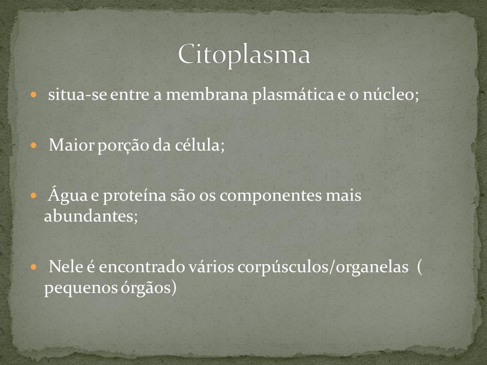 Citoplasma situa-se entre a membrana plasmática e o núcleo;