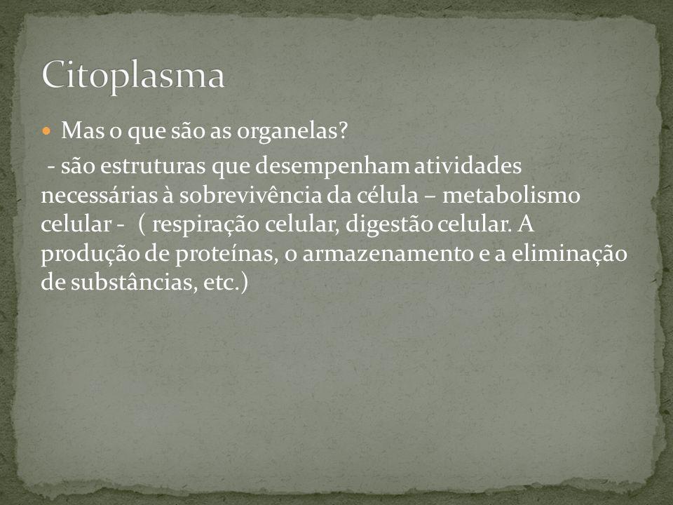 Citoplasma Mas o que são as organelas