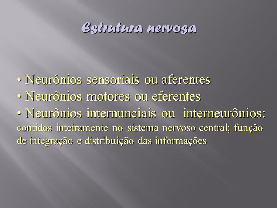 Estrutura nervosa Neurônios sensoriais ou aferentes