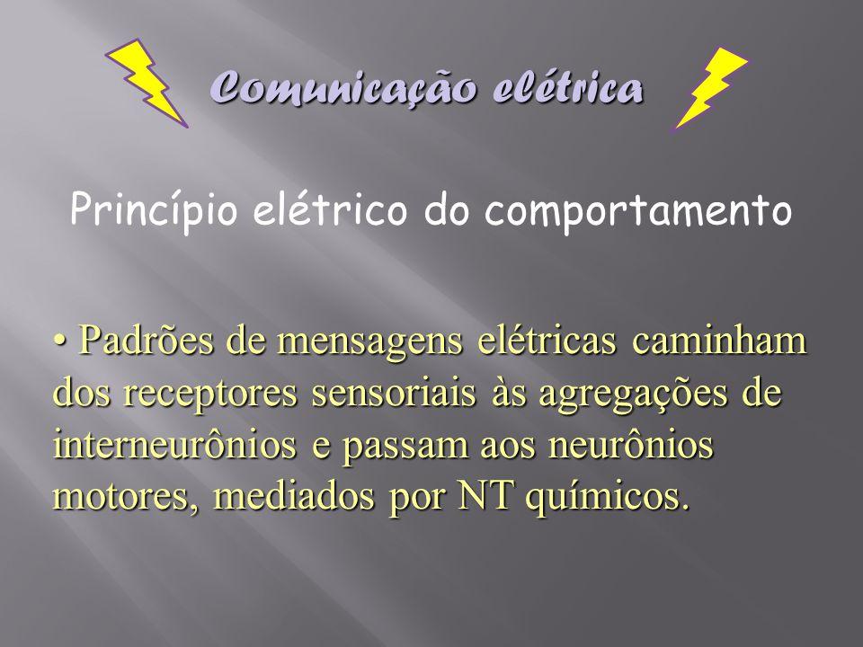 Princípio elétrico do comportamento