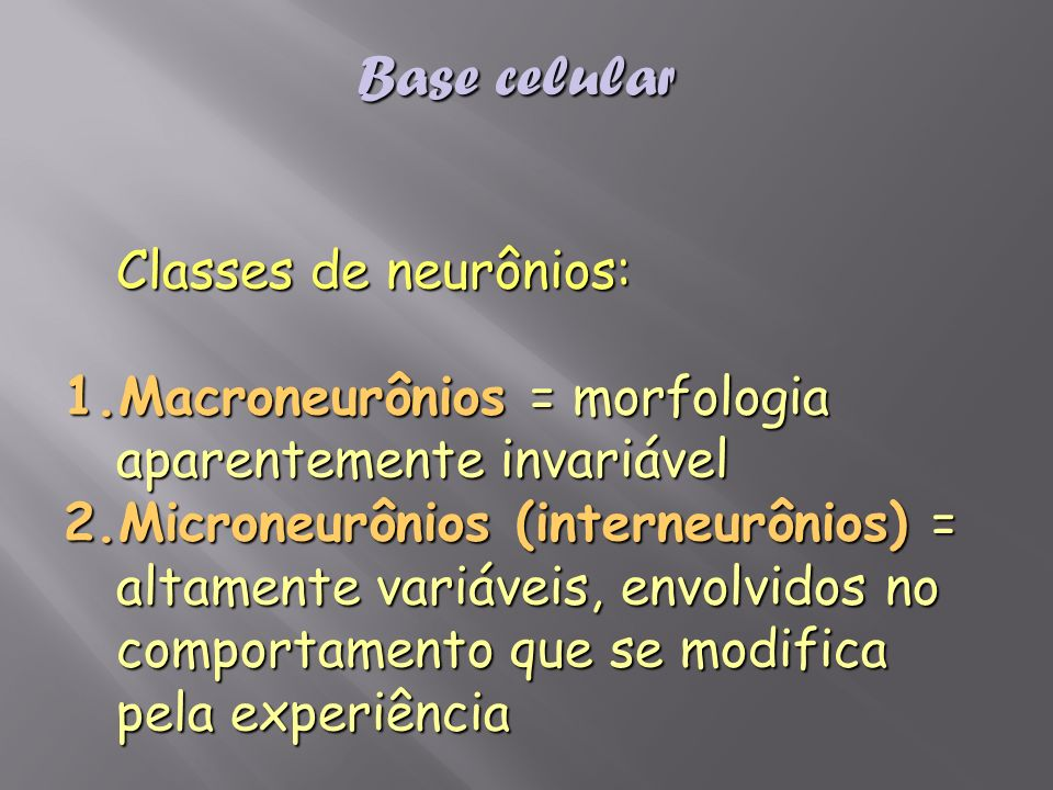 Base celular Classes de neurônios: