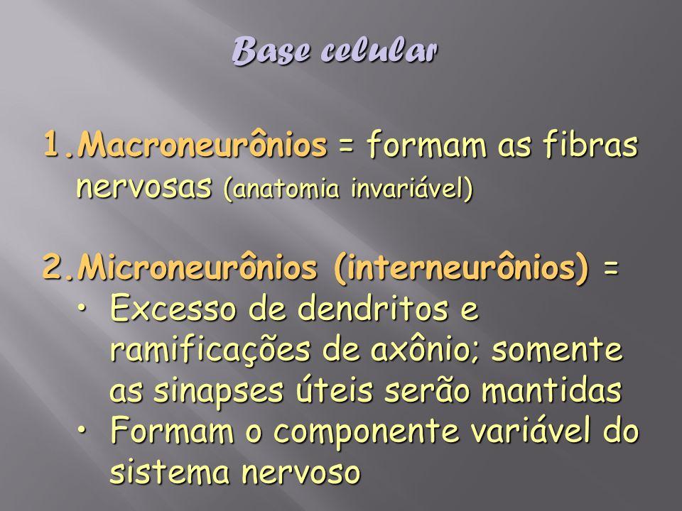 Base celular Macroneurônios = formam as fibras nervosas (anatomia invariável) Microneurônios (interneurônios) =