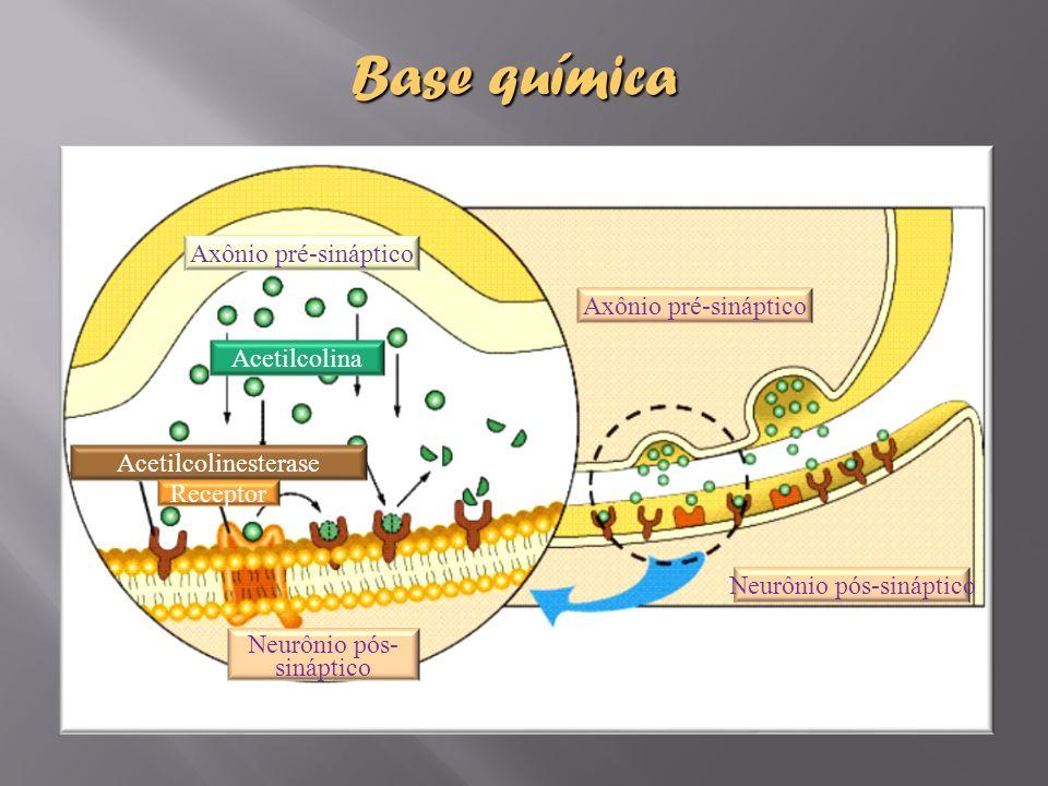 Neurônio pós-sináptico