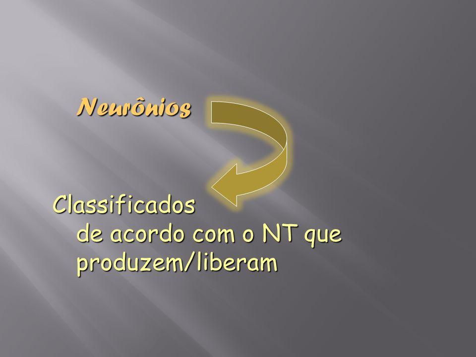 Neurônios Classificados de acordo com o NT que produzem/liberam