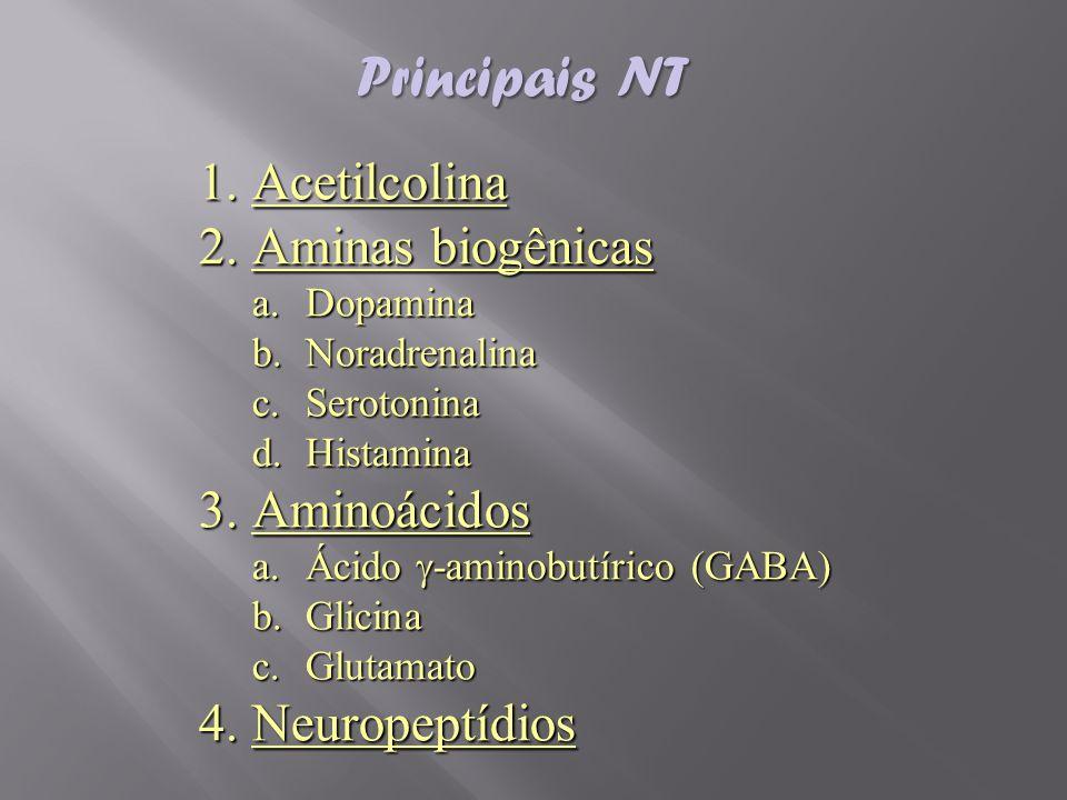 Principais NT Acetilcolina Aminas biogênicas Aminoácidos