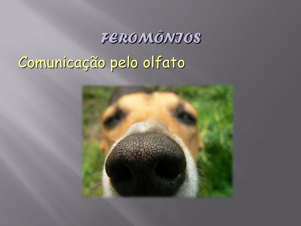 Feromônios Comunicação pelo olfato