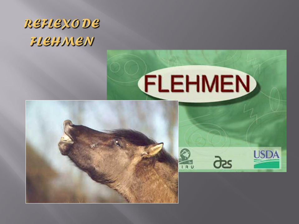 Reflexo de Flehmen