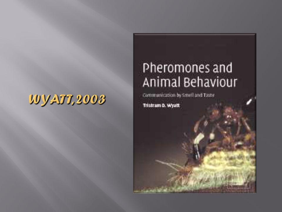 Wyatt, 2003