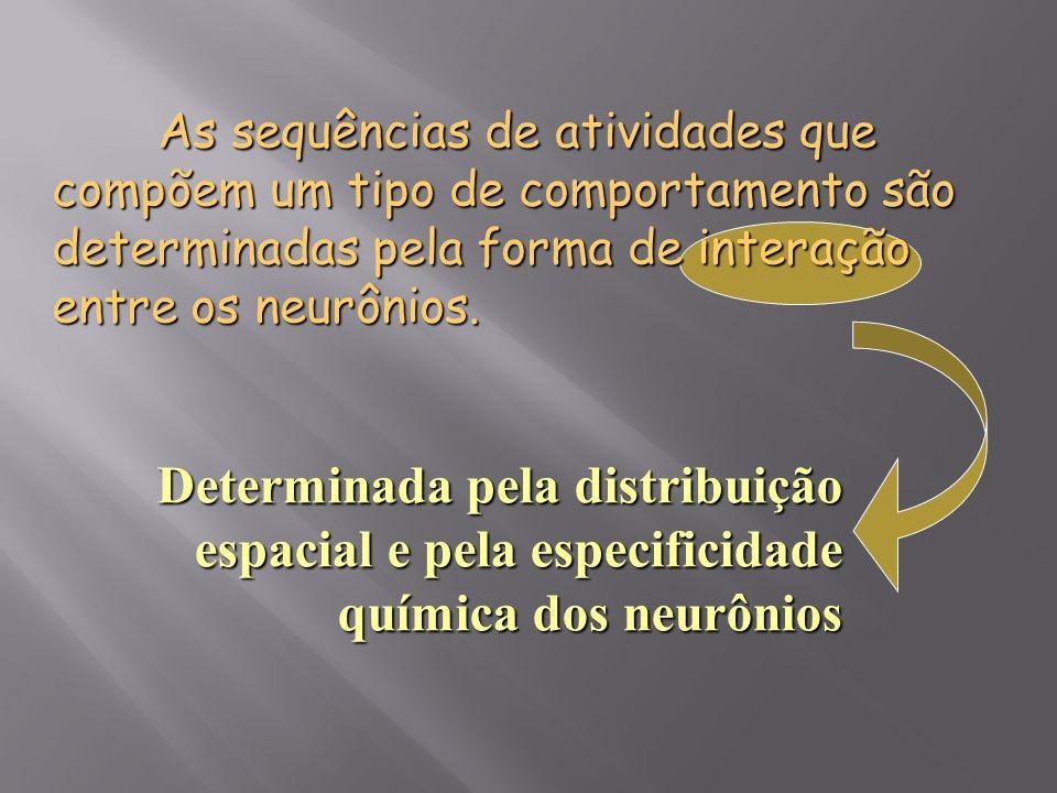 As sequências de atividades que compõem um tipo de comportamento são determinadas pela forma de interação entre os neurônios.