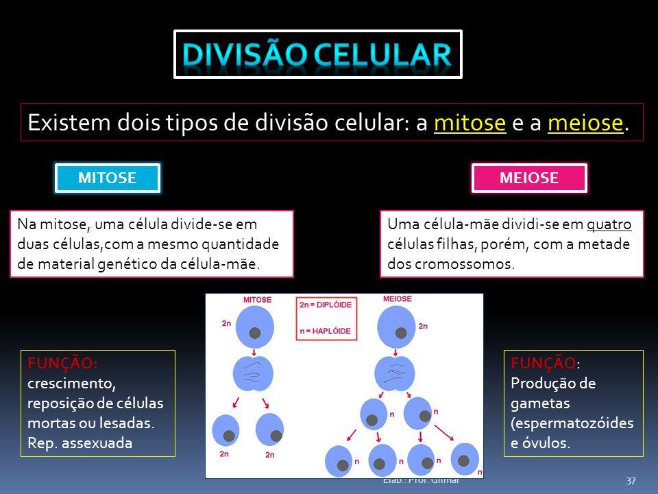Divisão Celular Existem dois tipos de divisão celular: a mitose e a meiose. MITOSE. MEIOSE. Na mitose, uma célula divide-se em.