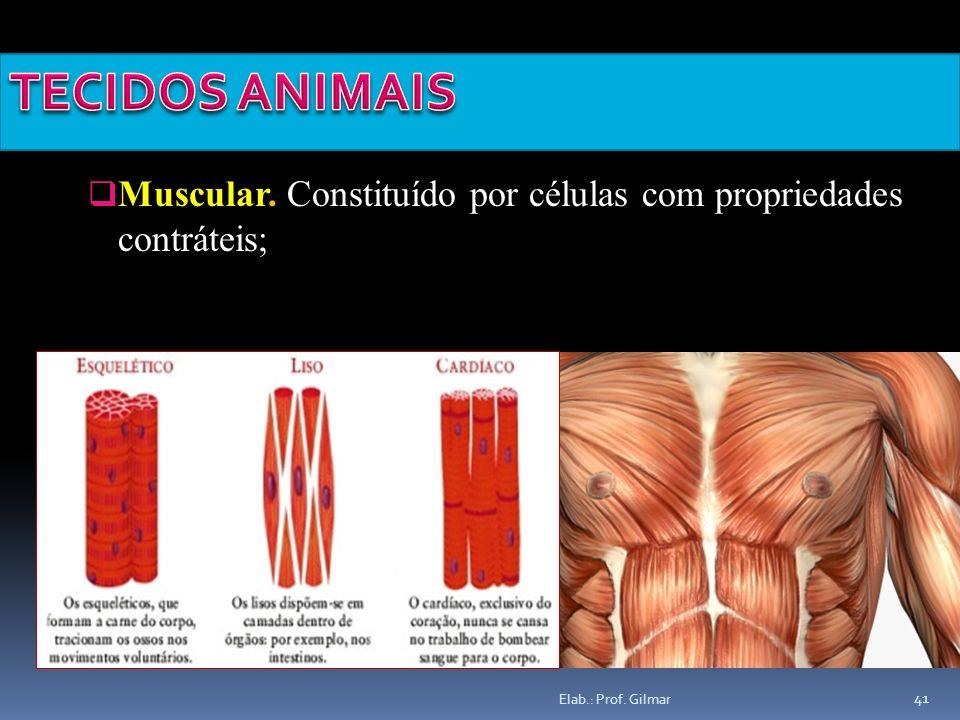 TECIDOS ANIMAIS Muscular.