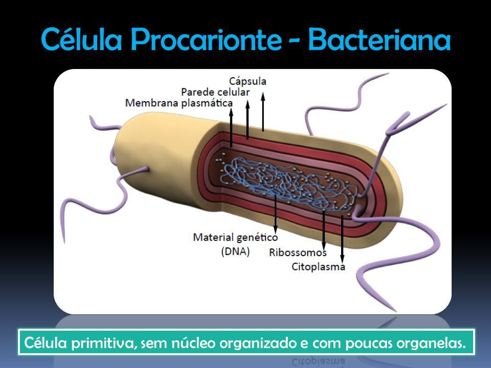 Célula Procarionte - Bacteriana