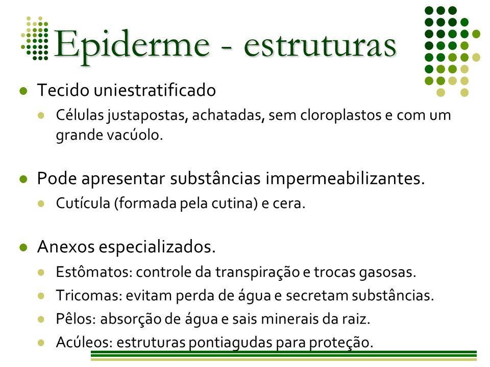 Epiderme - estruturas Tecido uniestratificado