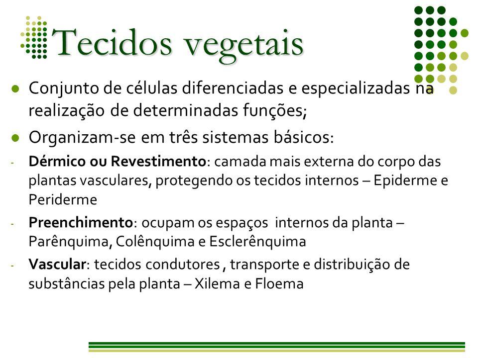 Tecidos vegetais Conjunto de células diferenciadas e especializadas na realização de determinadas funções;