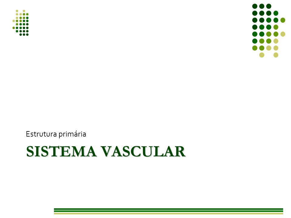 Estrutura primária Sistema vascular