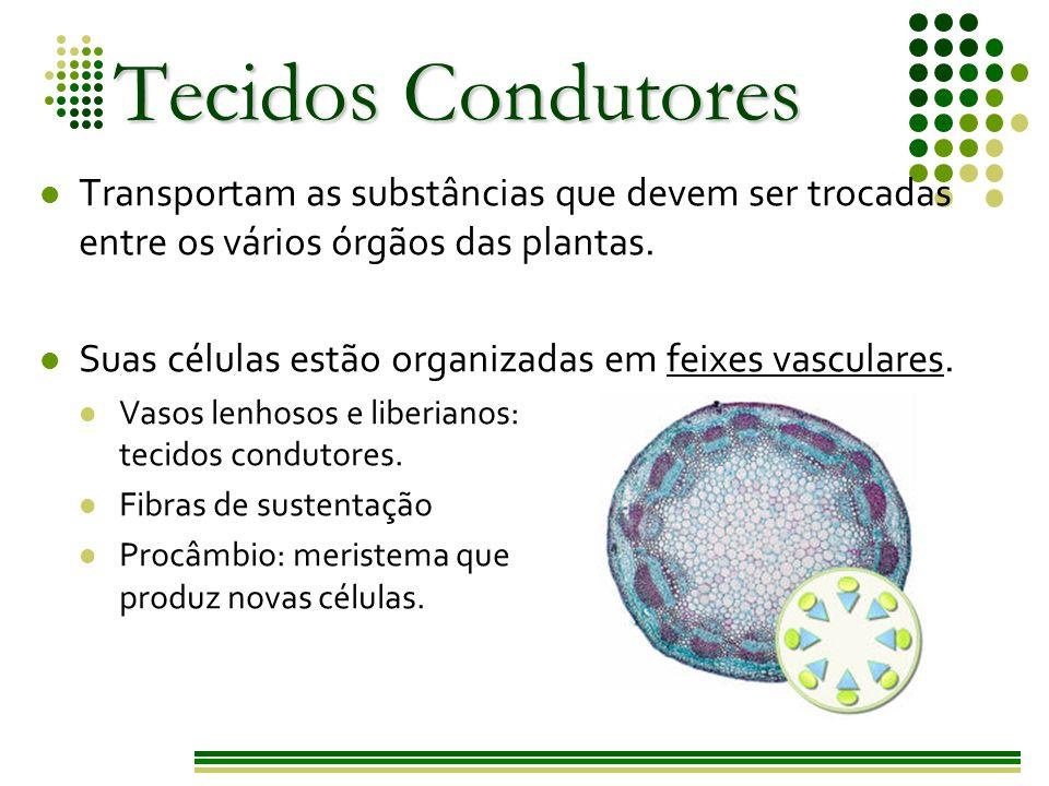 Tecidos Condutores Transportam as substâncias que devem ser trocadas entre os vários órgãos das plantas.