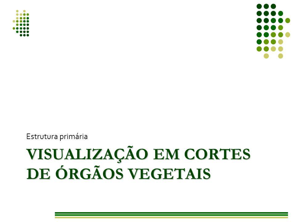 Visualização em cortes de órgãos vegetais