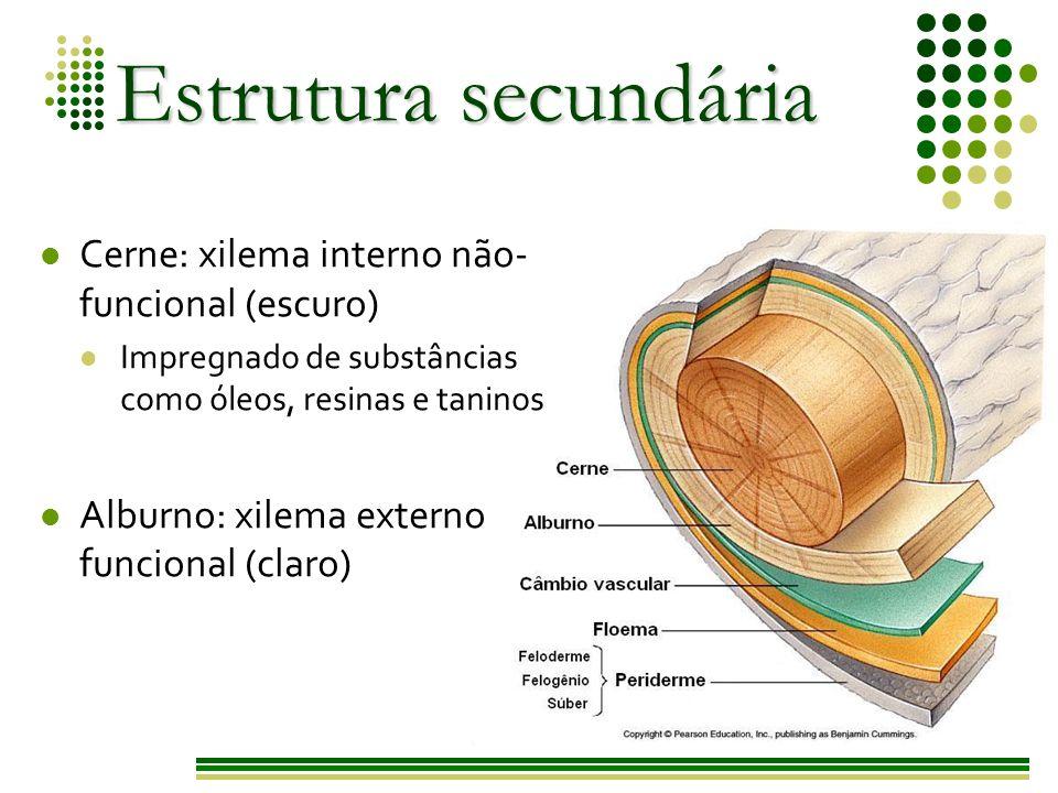 Estrutura secundária Cerne: xilema interno não-funcional (escuro)