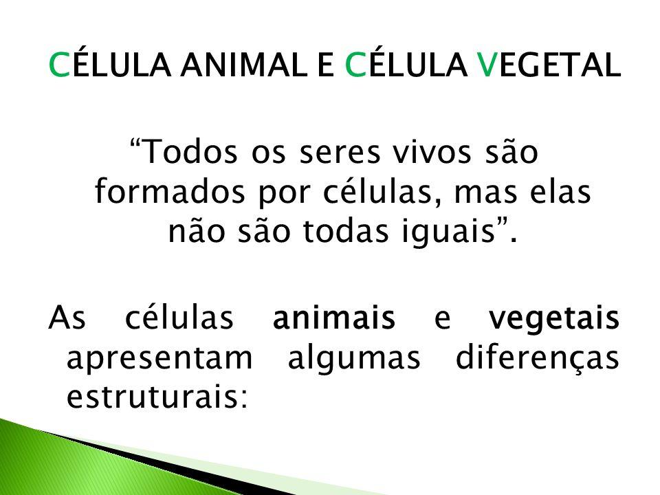CÉLULA ANIMAL E CÉLULA VEGETAL Todos os seres vivos são formados por células, mas elas não são todas iguais .