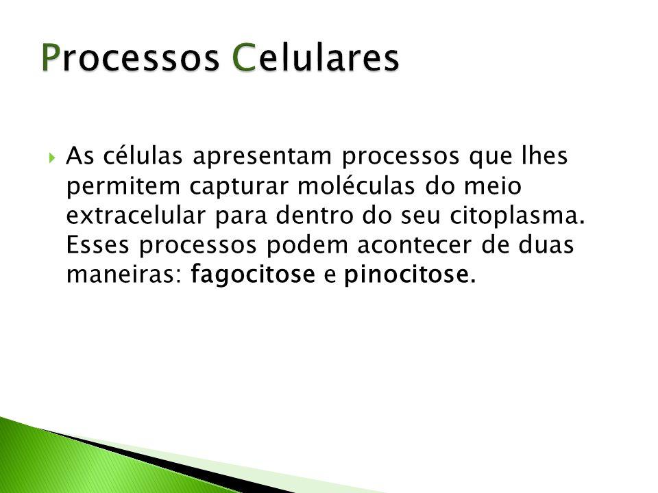 Processos Celulares
